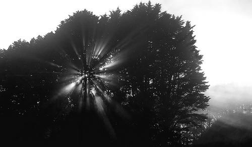 Radiant Tree © Viktoria Heard